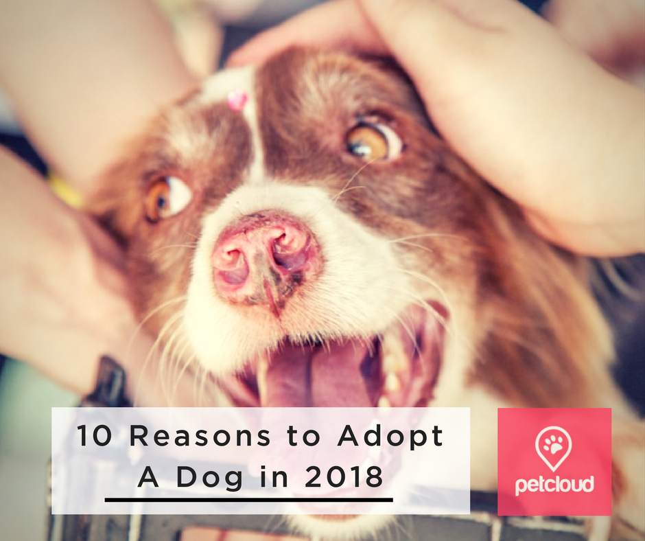 Adopt don't shop, RSPCA, 10 Reasons to Adopt a Dog in 2018, pet sitting, dog boarding, dog kennels, volunteers, dog lover, happy dogs, blog article image