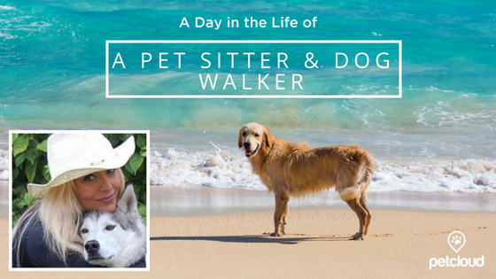 A Day in the Life of a Pet Sitter and Dog Walker with PetCloud on the Sunshine Coast blog article image