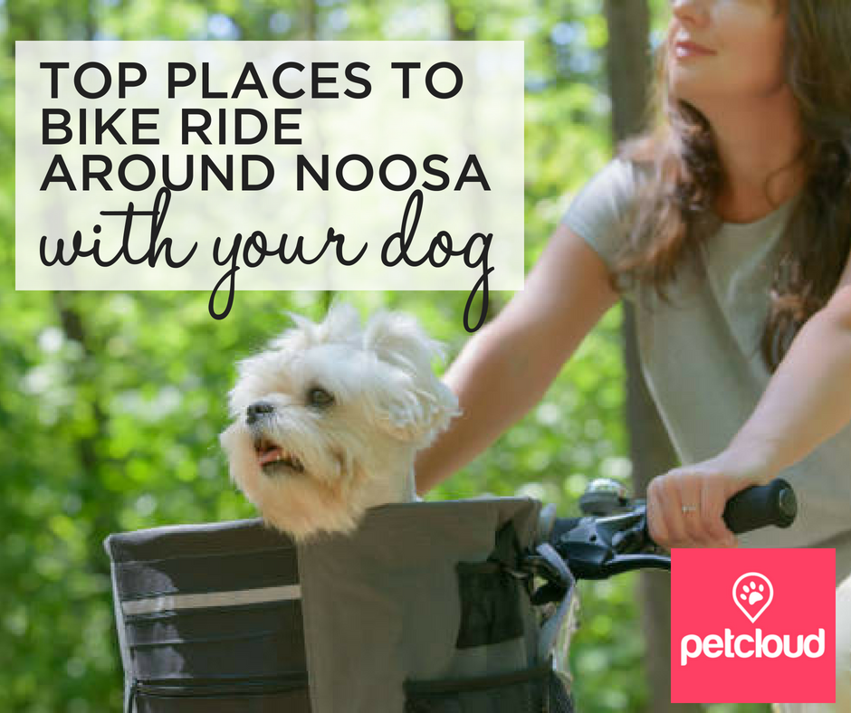 Bike riding with a Dog around Noosa blog article image