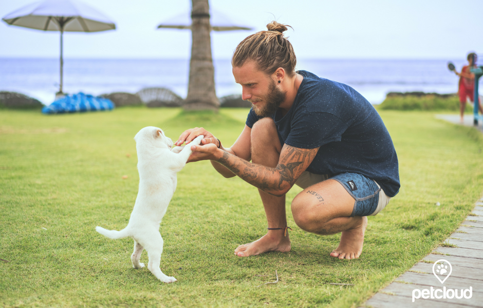 Byron Bay's Best Dog Friendly Activities