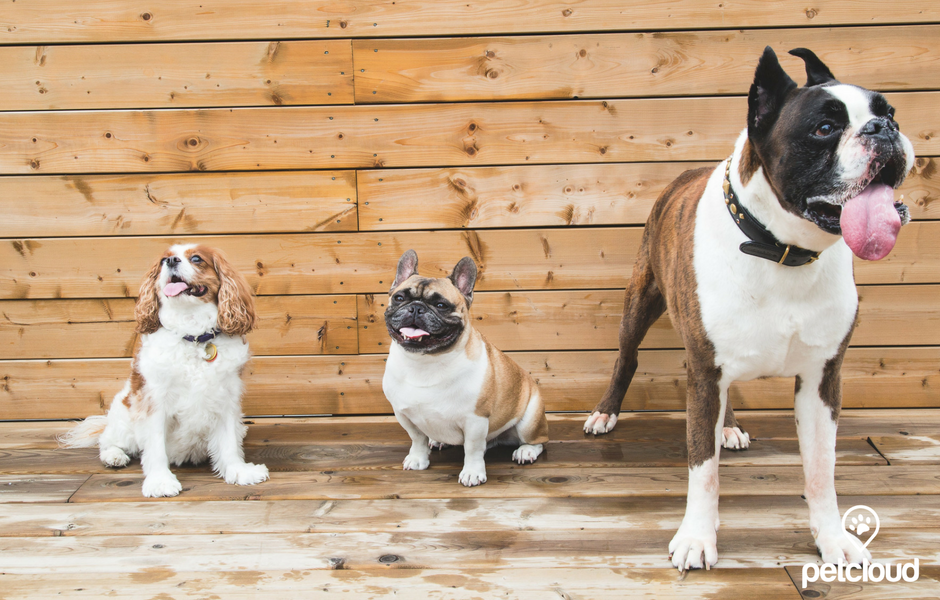 Three Dogs at Dog Friendly Cafe in Sydney by PetCloud blog article image