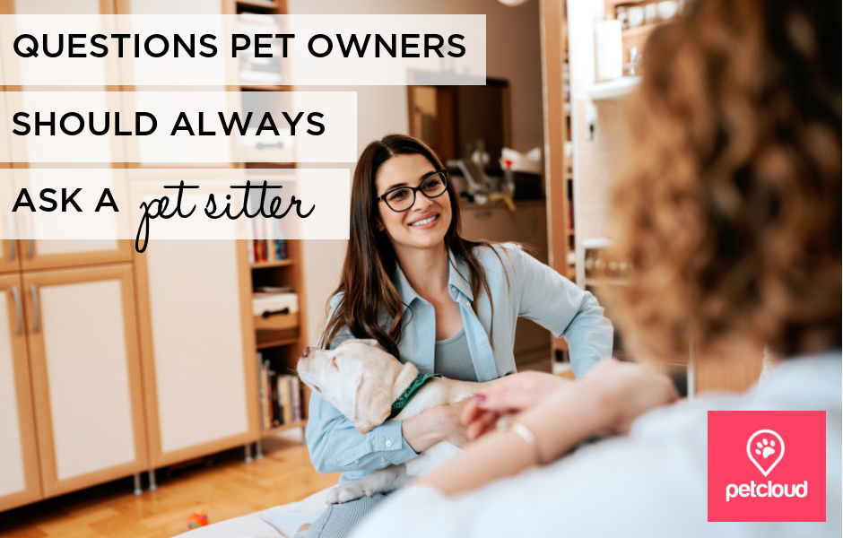 Pet Owner interviewing a Pet Sitter blog article image