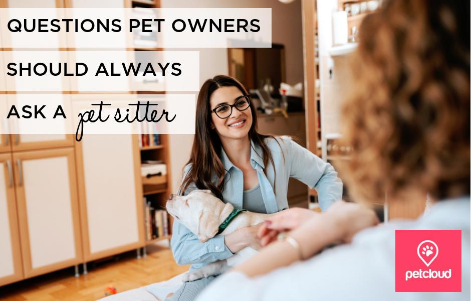 Pet Owner interviewing a Pet Sitter