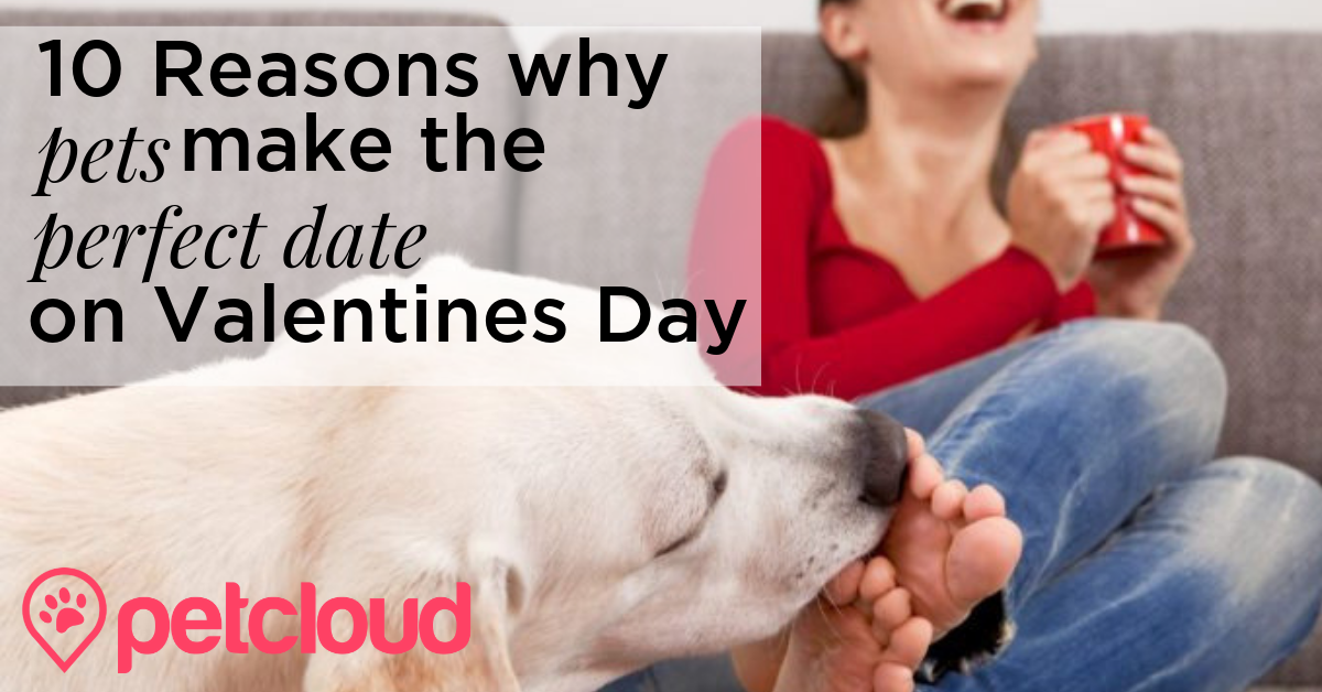Valentines Dog blog article image