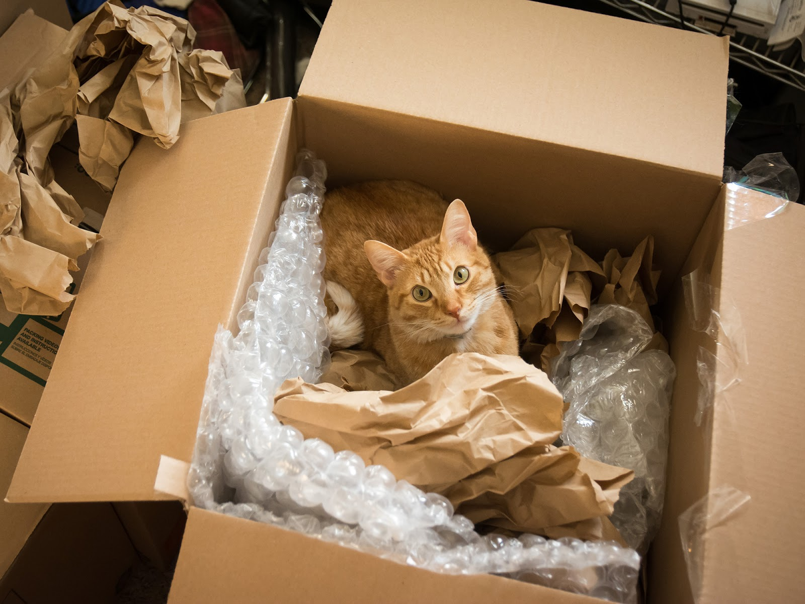 Moving house with your pets blog article image