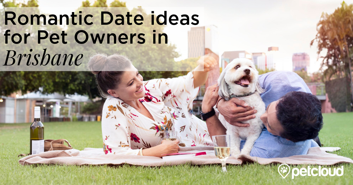 Pet Owners having a romantic date on the beach with their dog with the sun setting blog article image