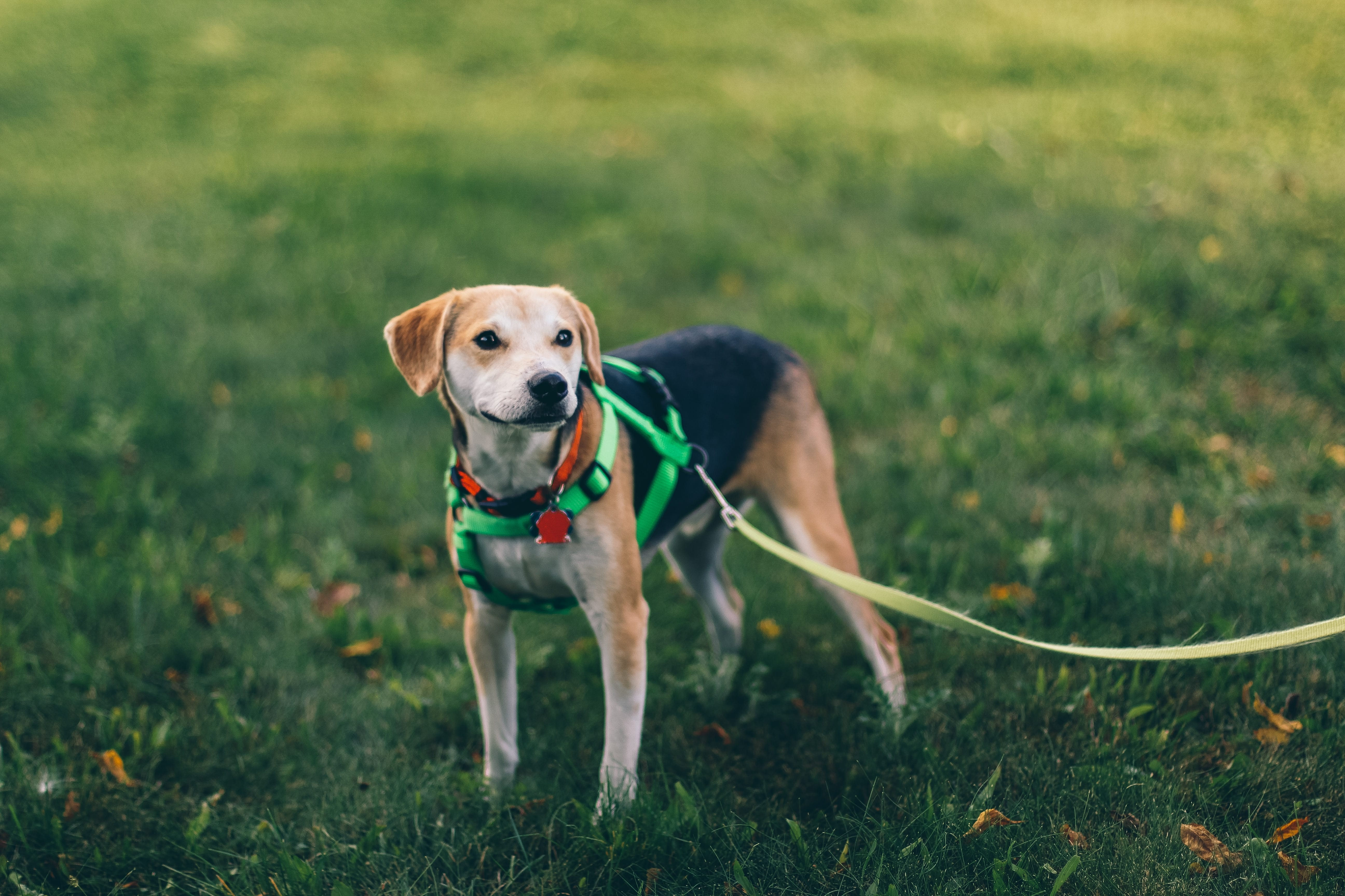 Keep a leach on your pet when moving to a new home