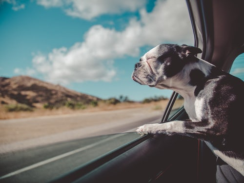 Transport your pets in your car