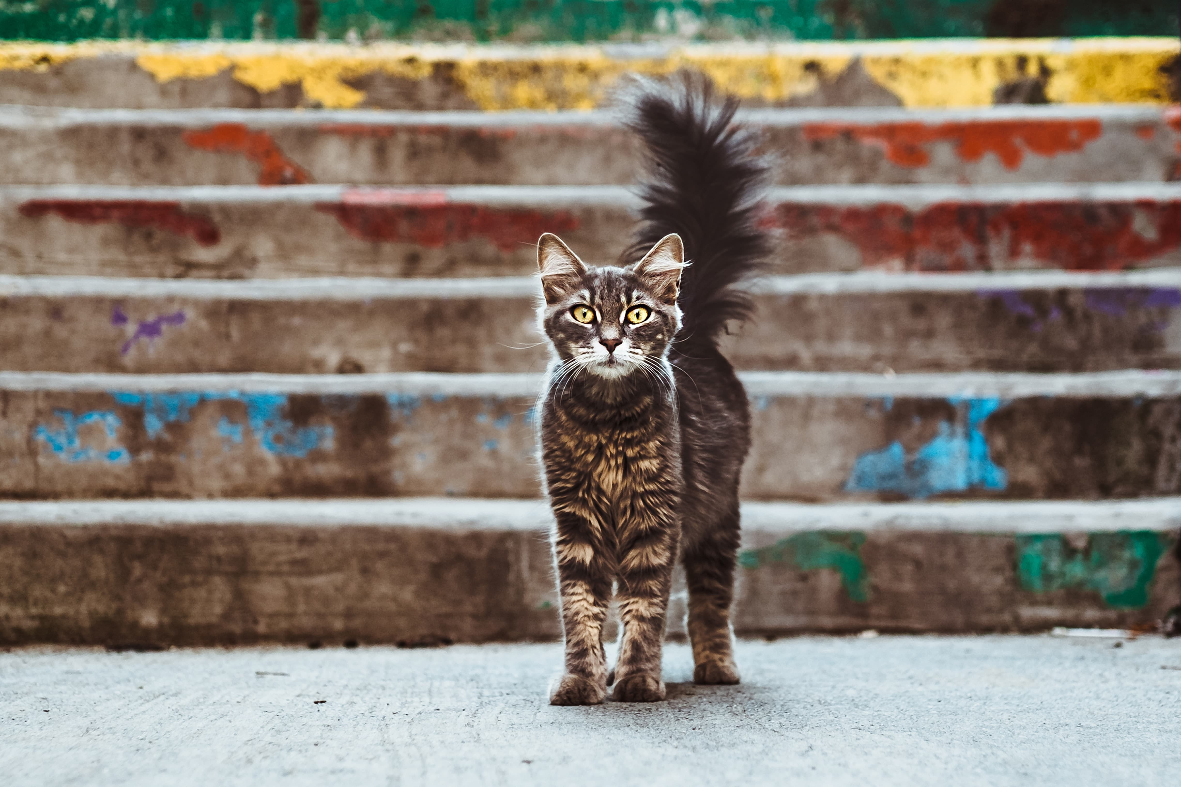 Don't lose your cat when moving house. Update your microchip