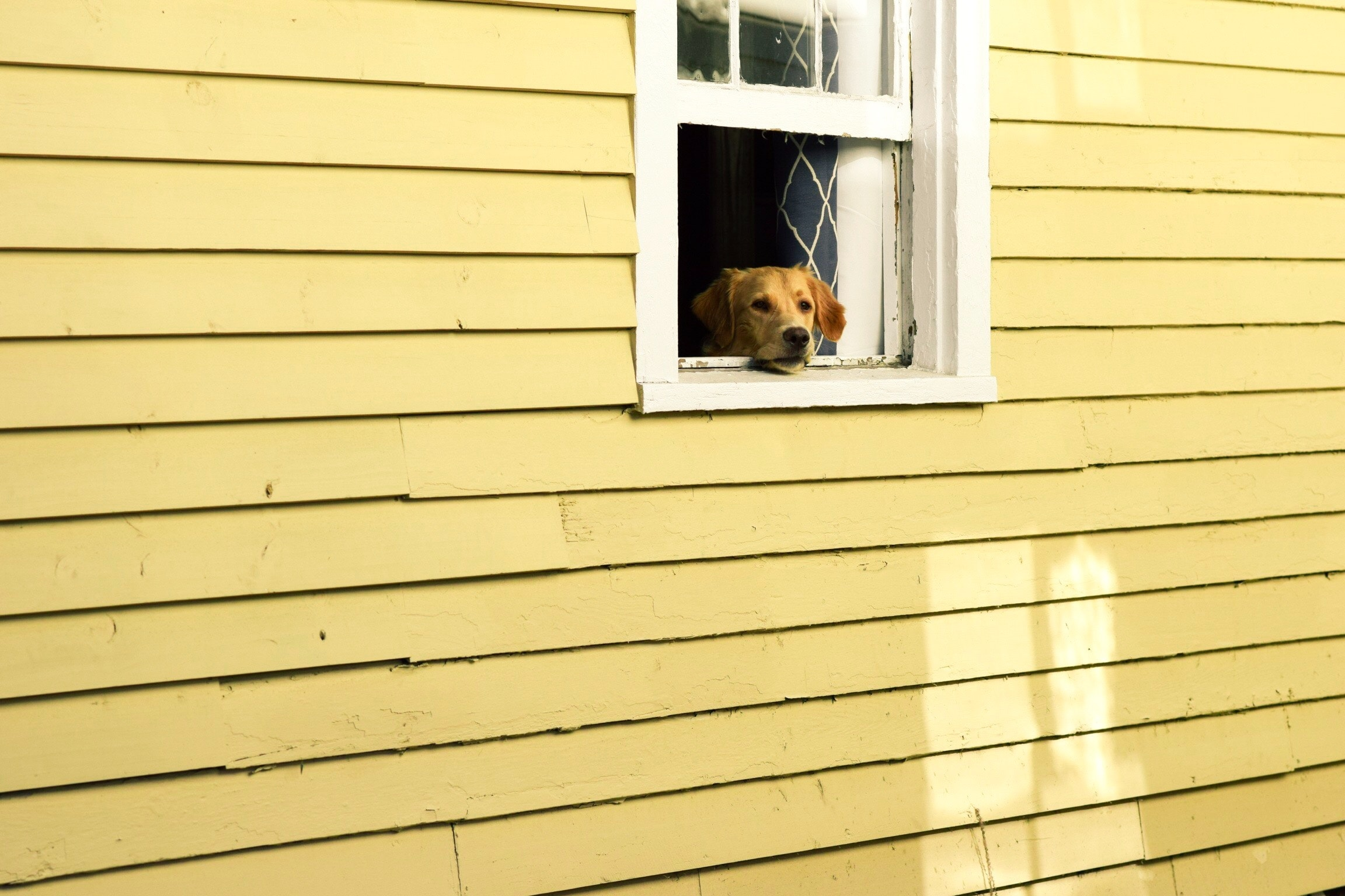 Pets may miss their old home. Give them time to adjust to their new environment