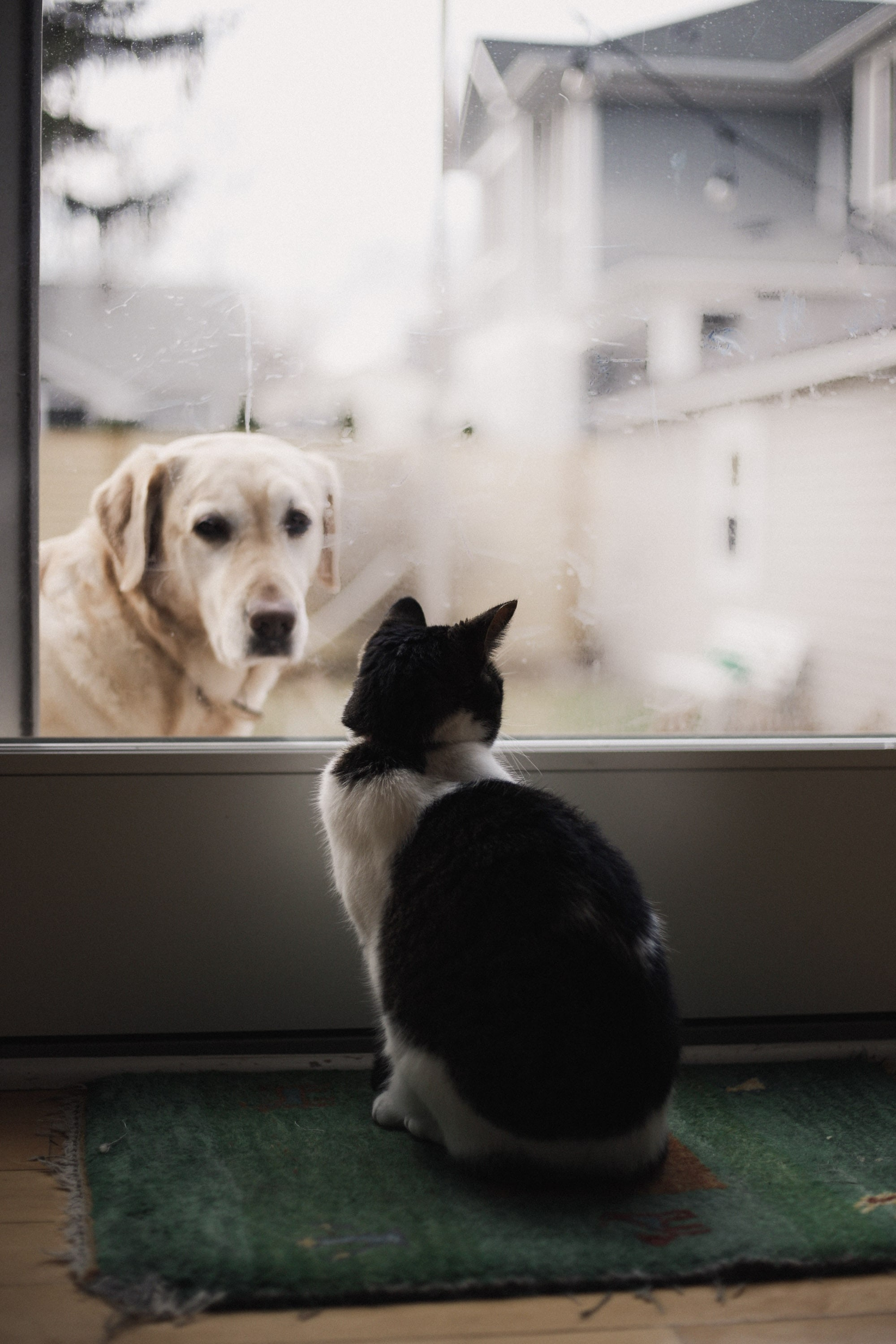 Pets like to explore new homes. Make sure you secure it