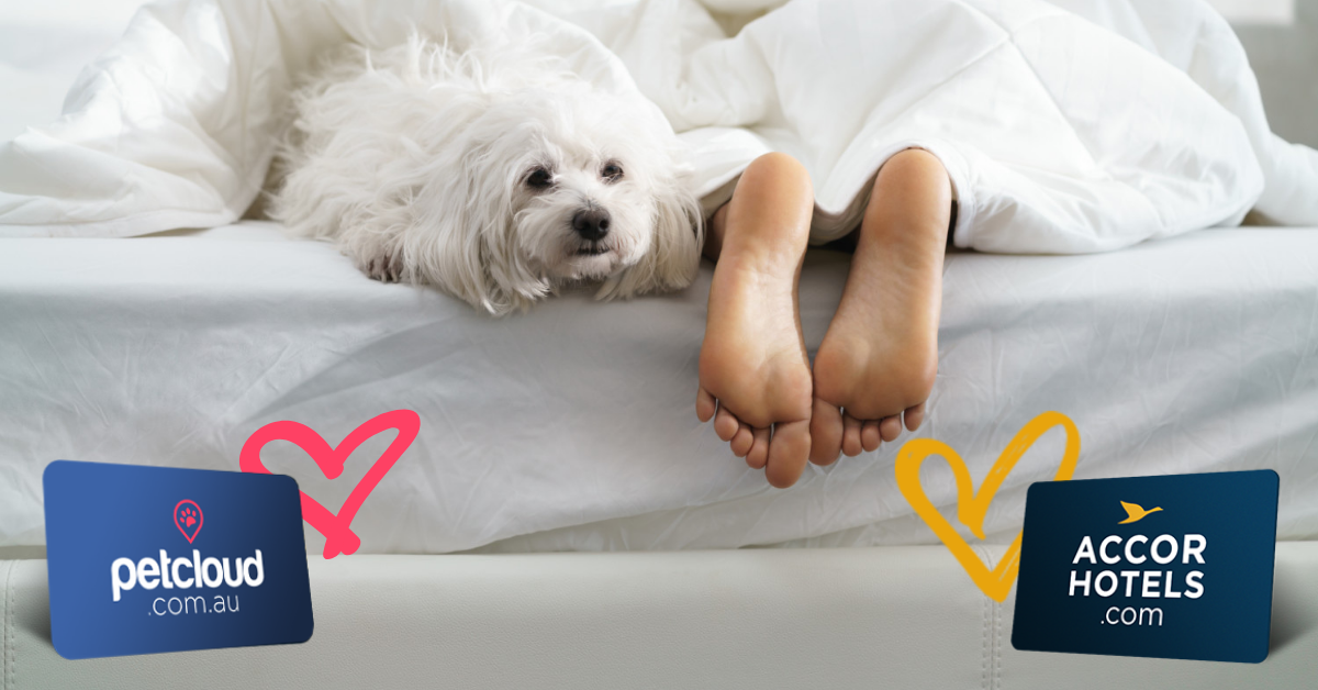 Pet Owner sleeping in bed with little white dog at the end blog article image