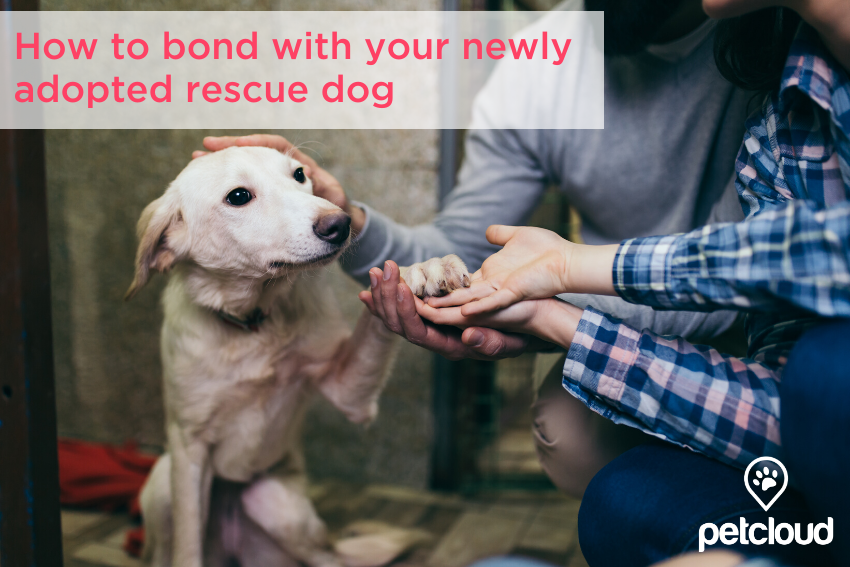 Rescue dog meeting its new pet owners blog article image