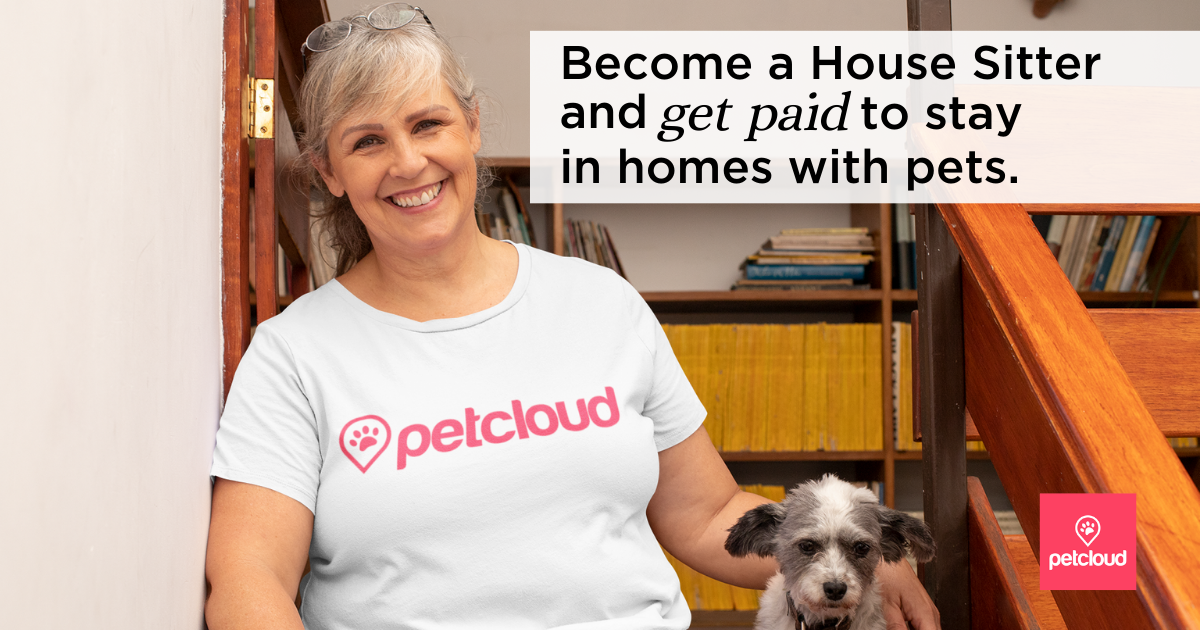 Smiling House Sitter with little dog blog article image