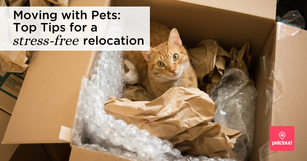 A ginger cat in a removalist box blog article image