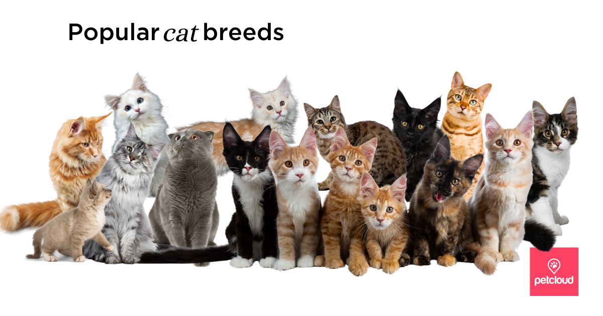 Popular Cat Breeds For Families With Children