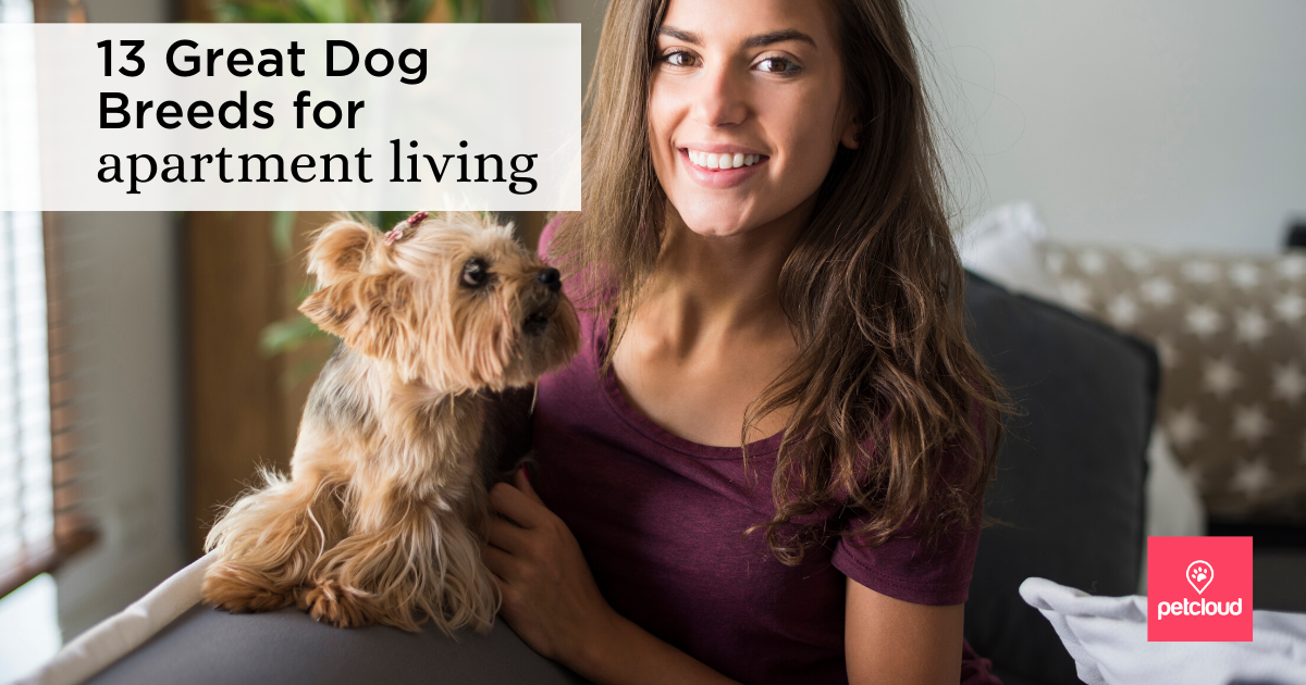 Dog in apartment