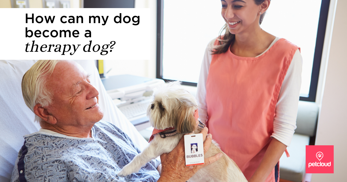 Patient in hospital holding a small therapy dog, ndis, pet therapy, assistance dog, emotional support dog, ADHD, DISABILITIES, MENTAL ILLNESS, SERVICE ANIMALS