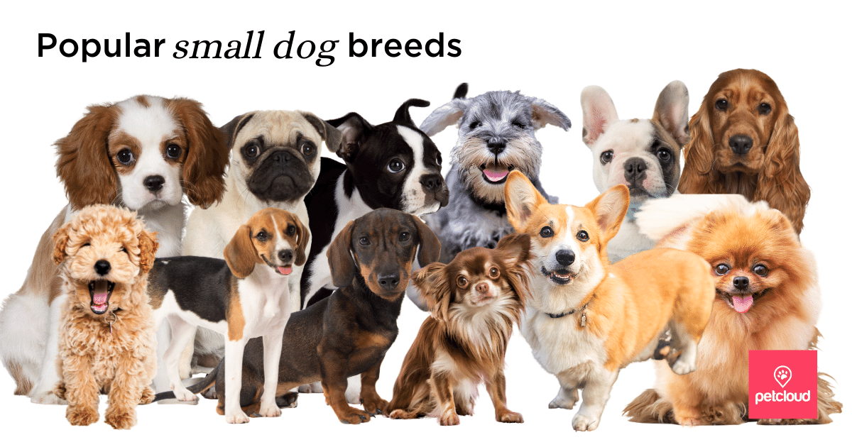 Popular small dog breeds