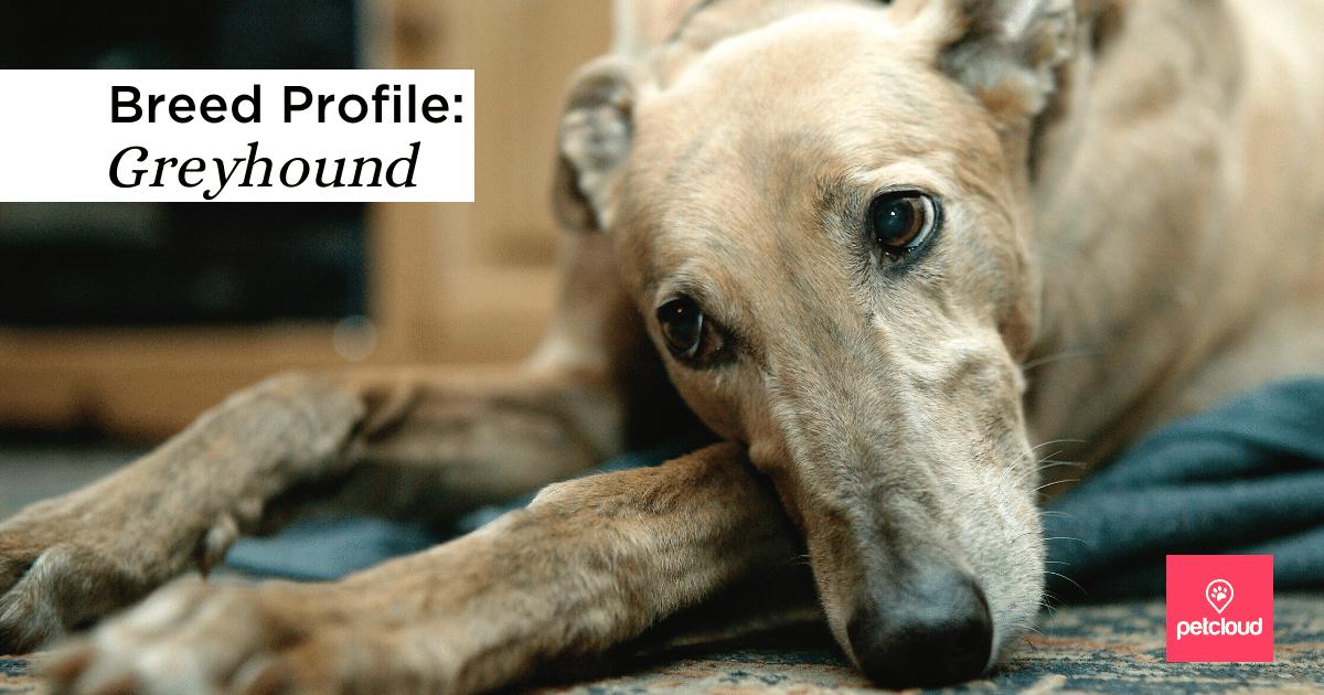Happy Greyhound blog article image