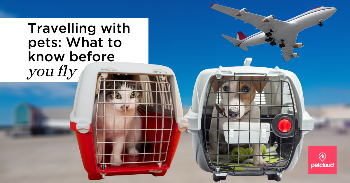Travelling with pets blog article image