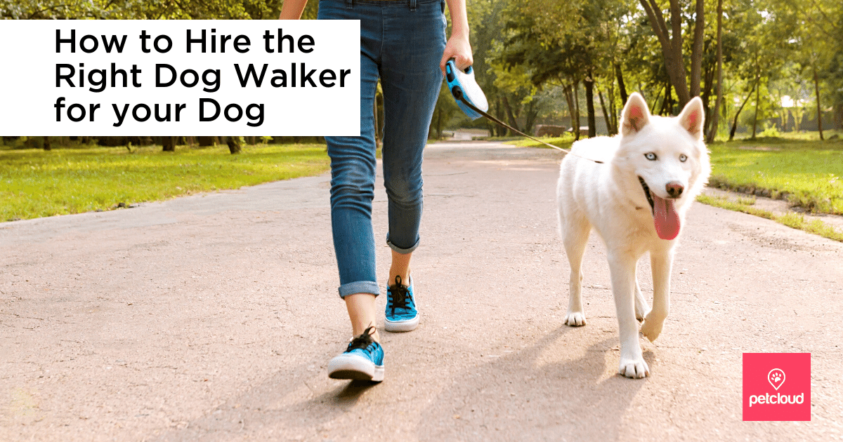 Professional Dog Walker walking a husky dog on a leash