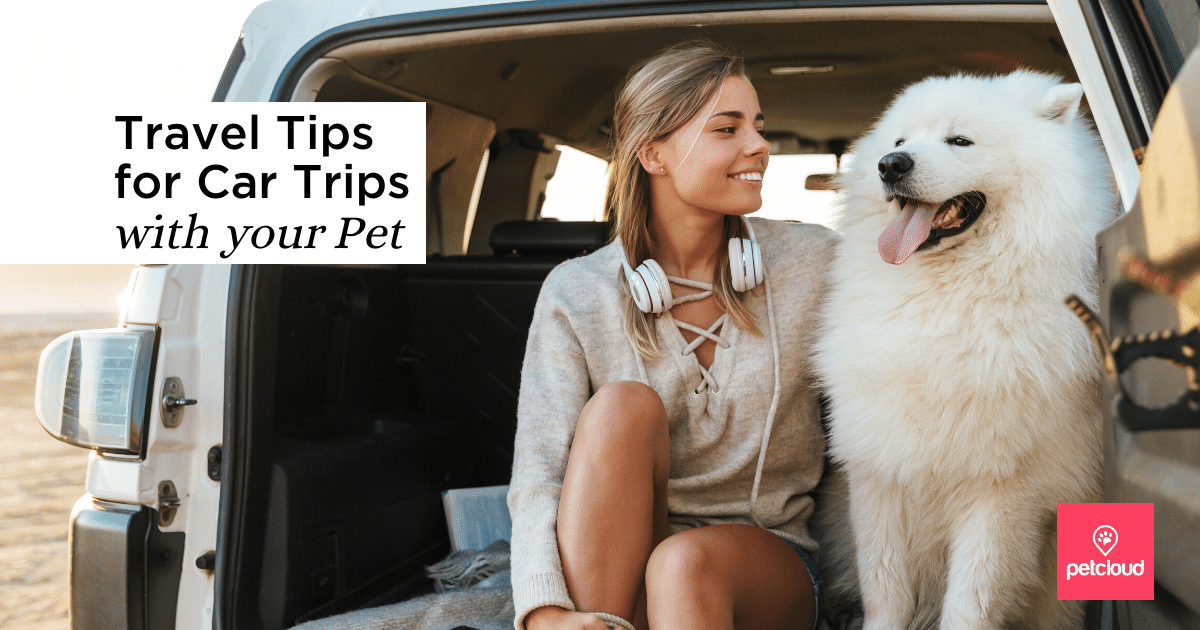 Happy Dog with Owner in Car during a Car Trip blog article image