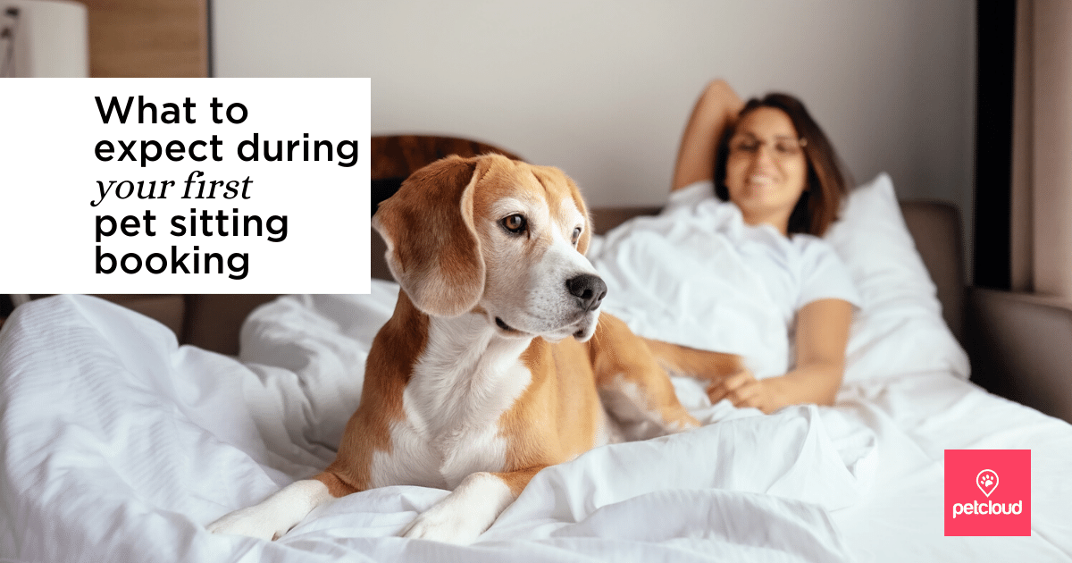Pet Sitter in bed with dog on covers blog article image