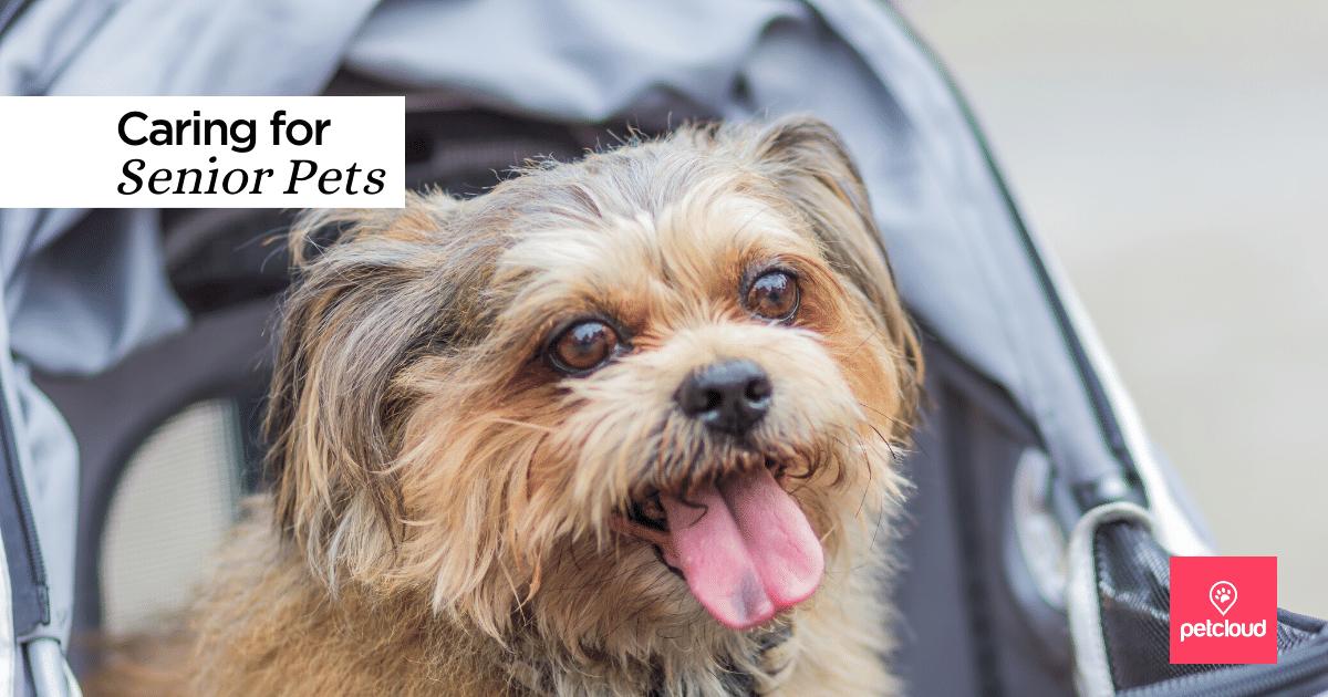 happy senior dog in a pet pram