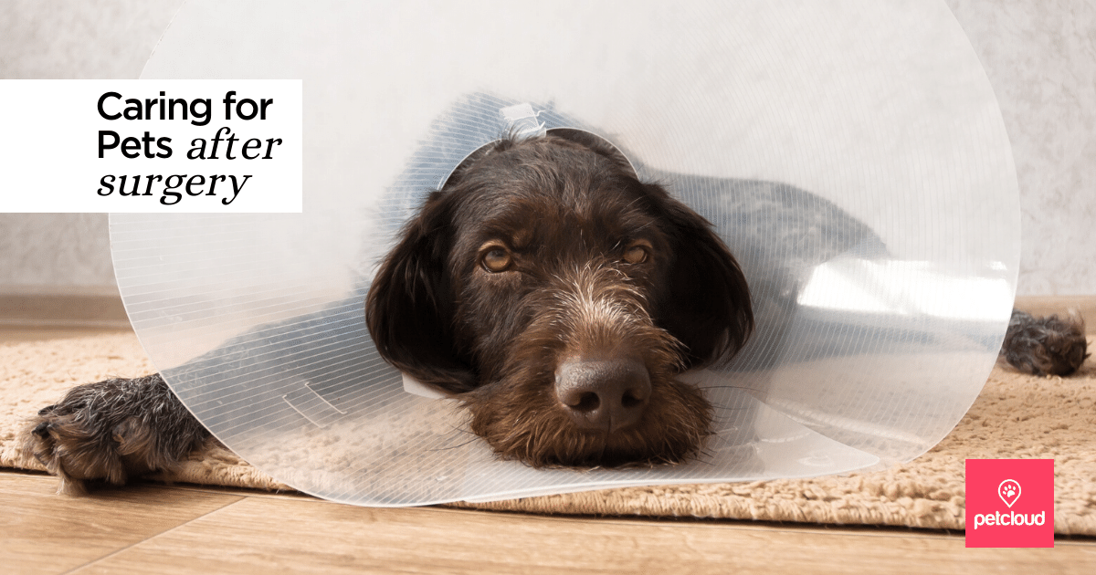 Caring for Pets After Surgery blog article image