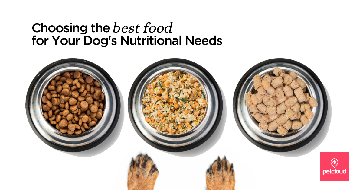 dog kibble, fresh dog food, freeze dried dog food and dogs paws. blog article image