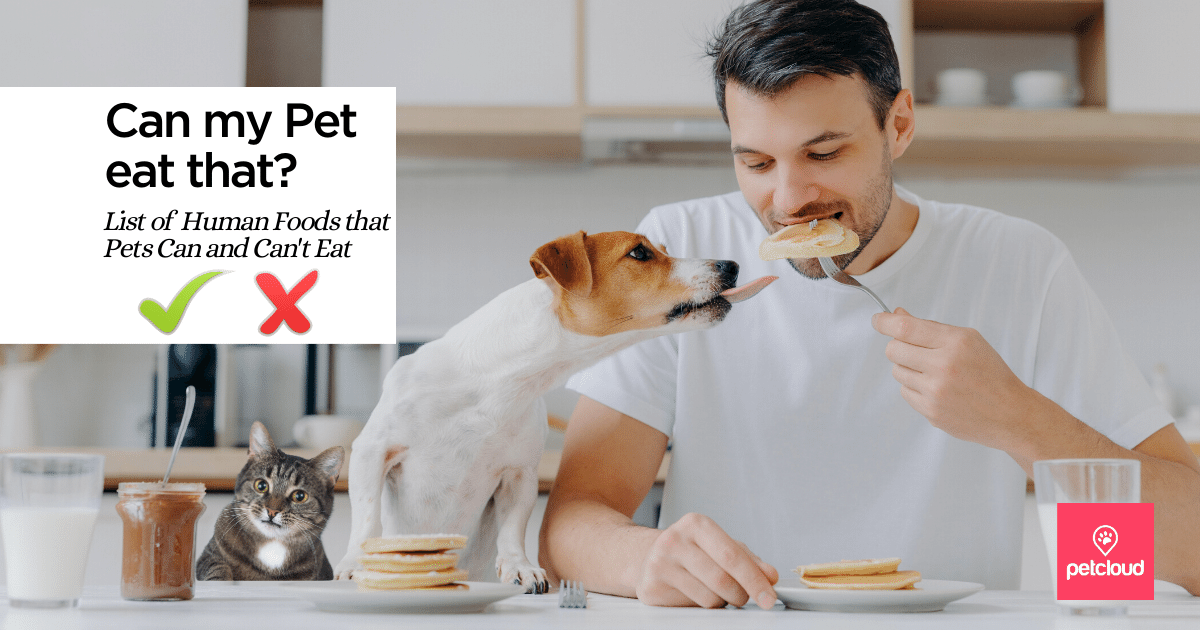 Man trying to eat food that Dog and Cat are trying to eat