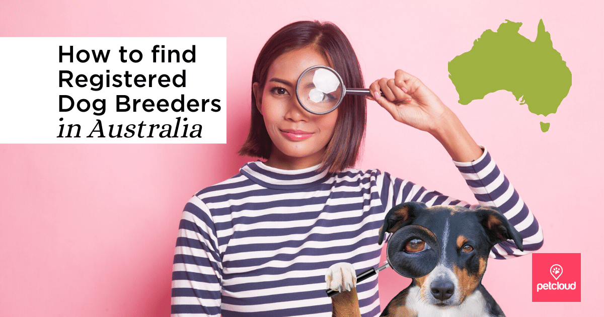 Woman with magnifying glass searching for a dog breeder