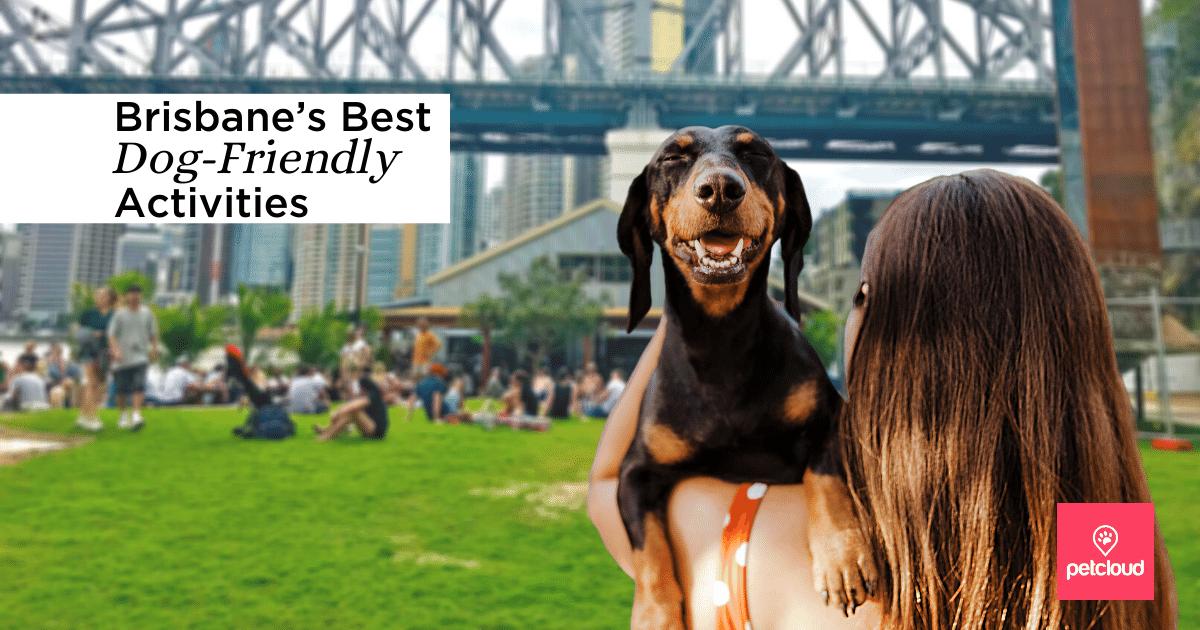 Brisbane's Best Dog-Friendly Activities blog article image