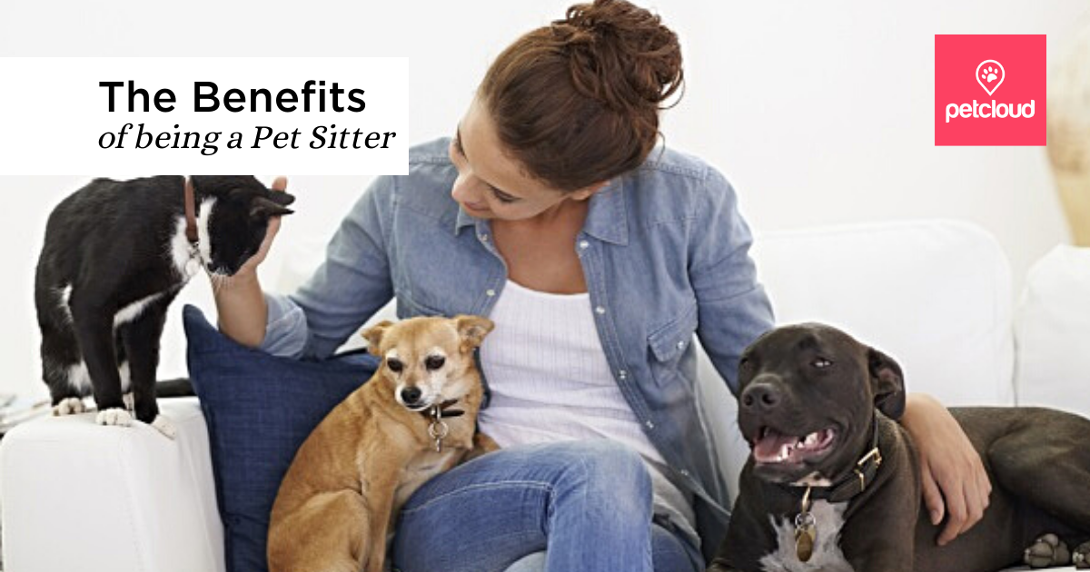 The Benefits of Being a Pet Sitter