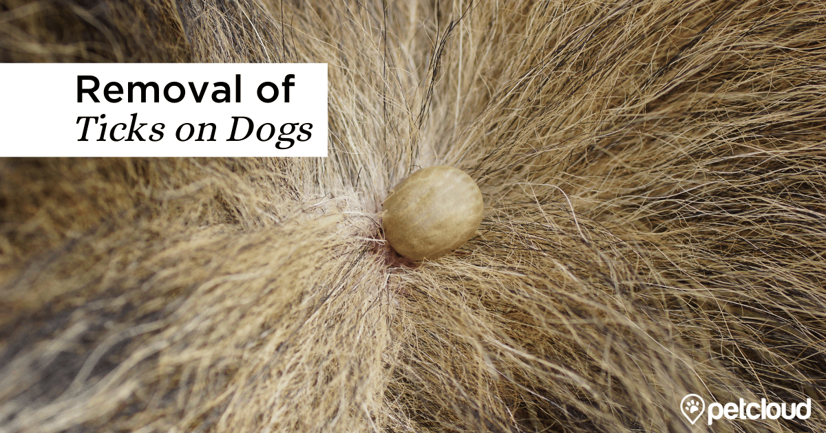 Tick on a Dog blog article image