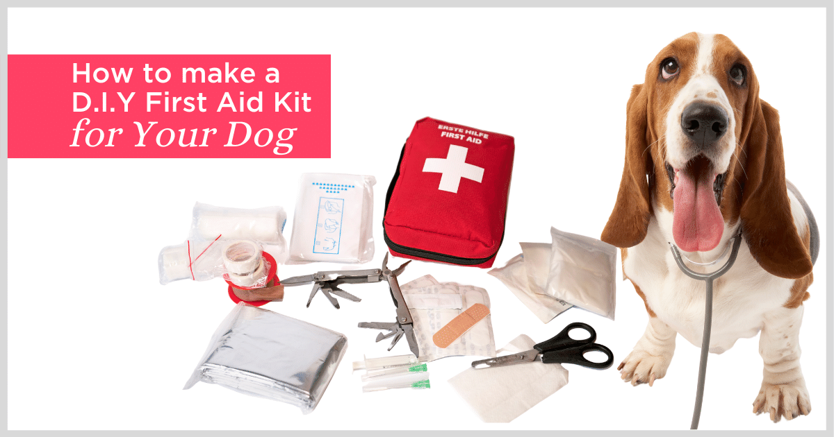 Dog with Pet First Aid Kit
