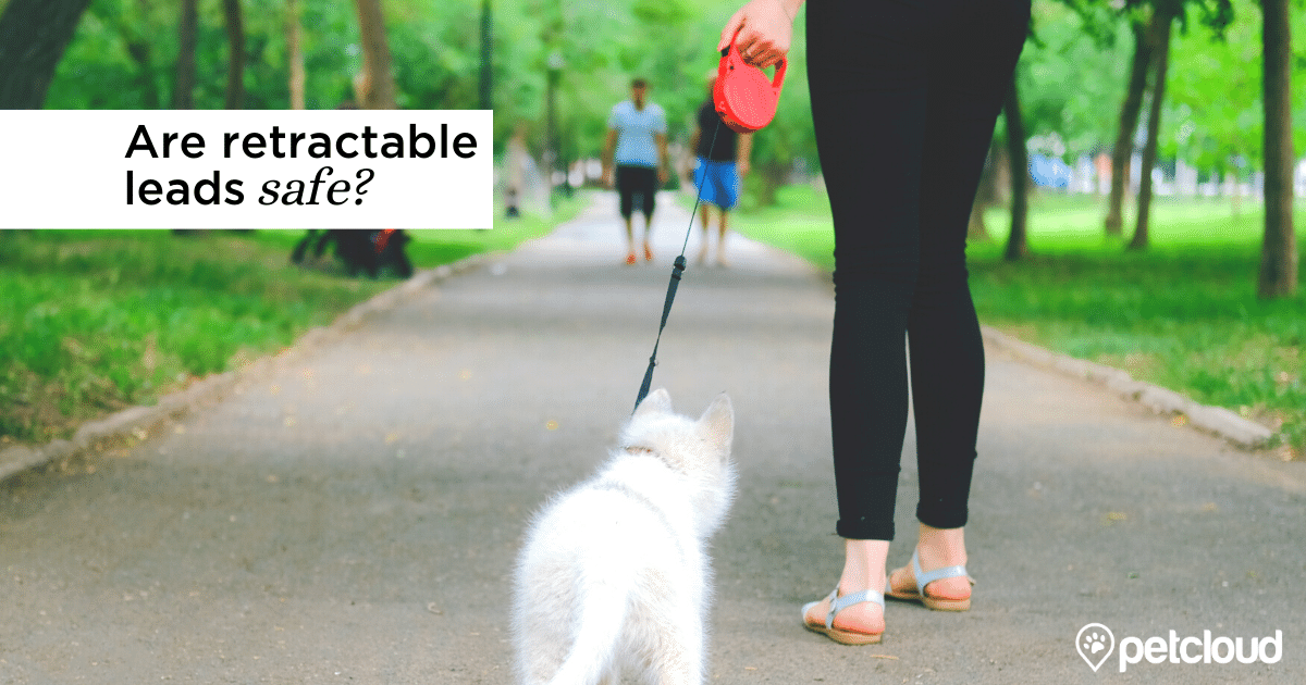 Retractable leash blog article image