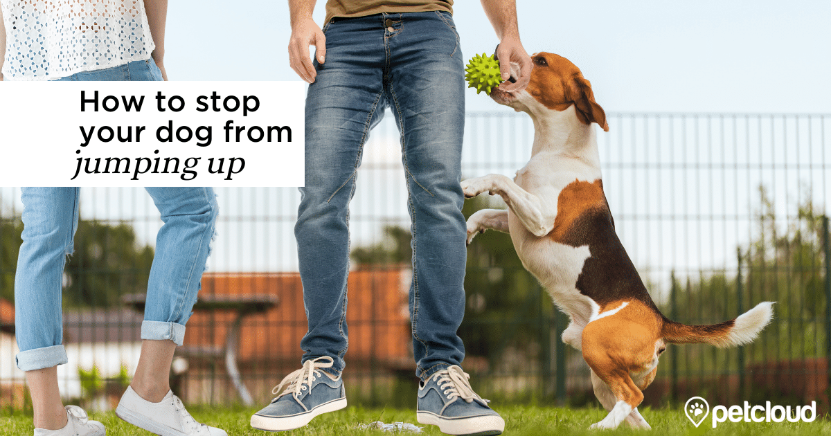 Dog jumping up on people blog article image