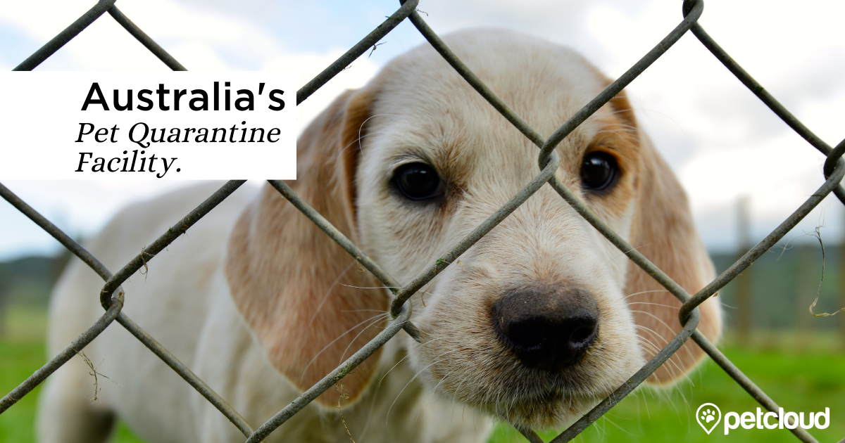 Quarantine for Dogs and Cats in Australia blog article image