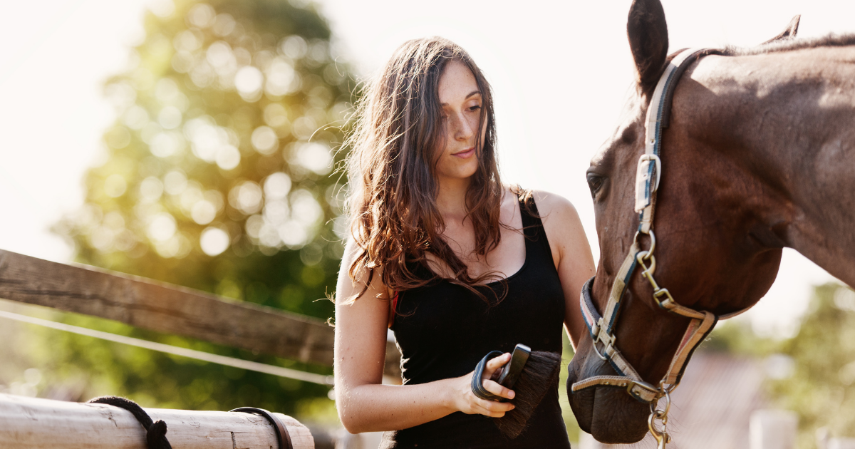 woman brushing a horse,  house sitter, horse rider, horse care, sydney, brisbane, melbourne, adelaide, perth, darwin, hobart, byron bay, gold coast, canberra blog article image