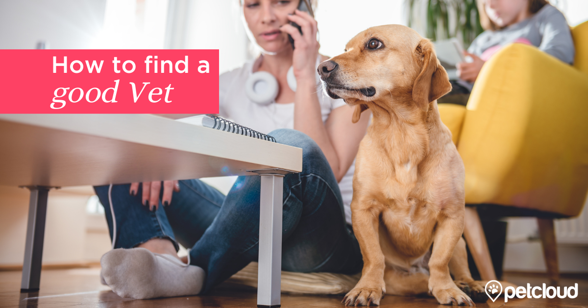 Concerned Woman looking for a Vet with a dog in the foreground blog article image