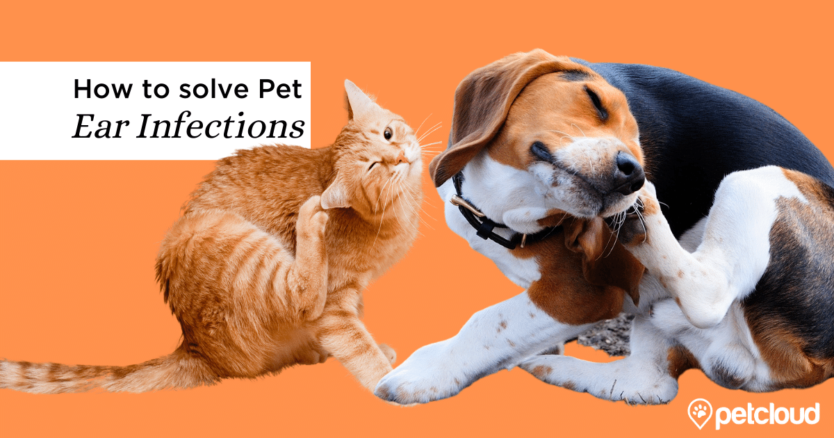 Dog and Cat with Ear Infection blog article image