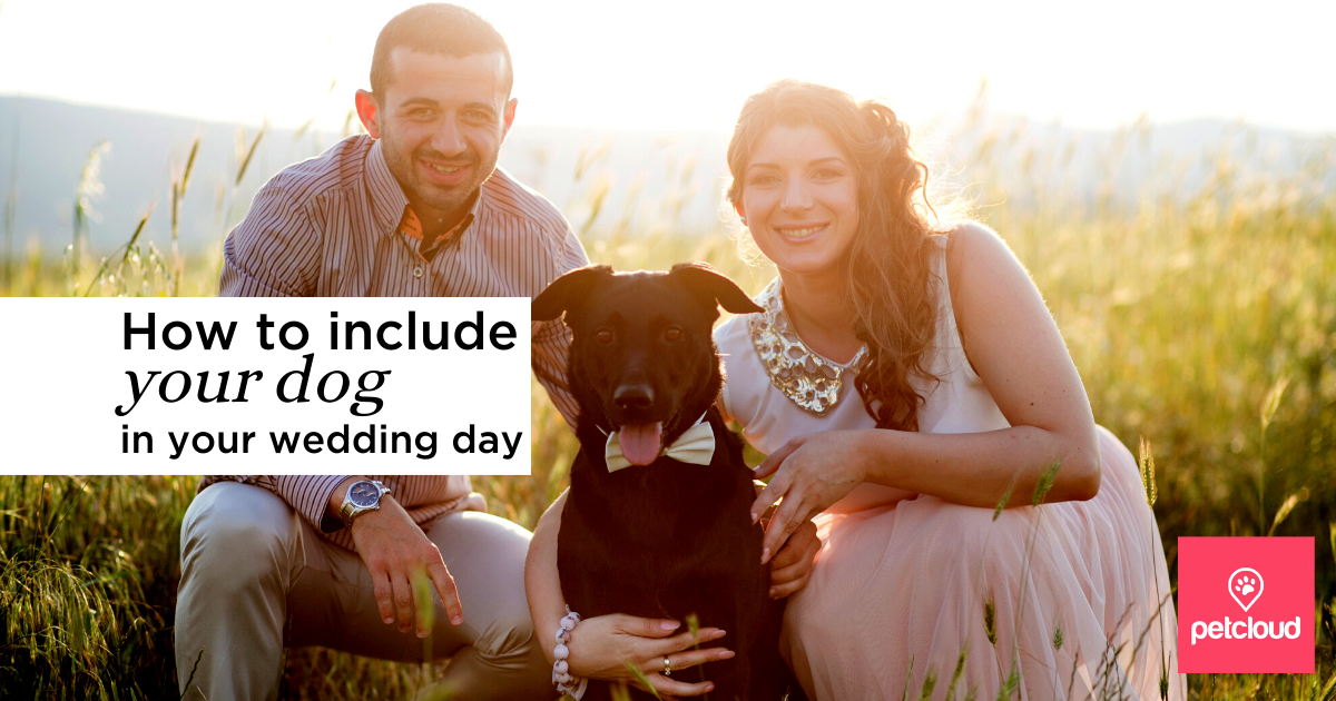 Dog with Bride and Groom on wedding day blog article image