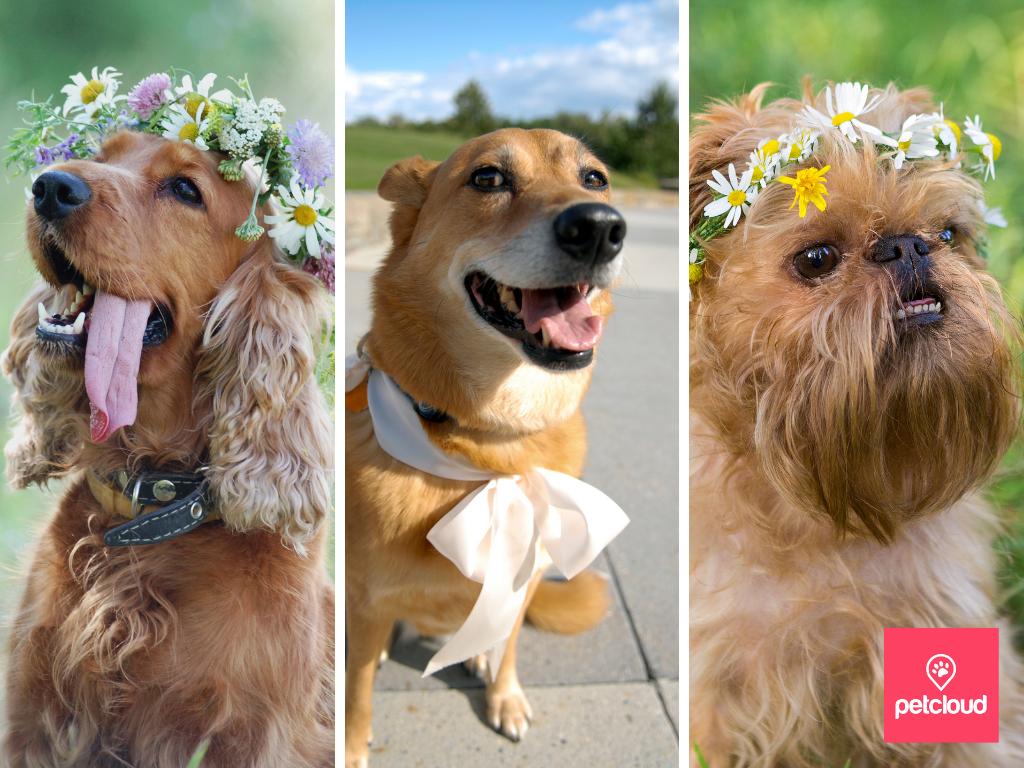 dog wedding flower wreath