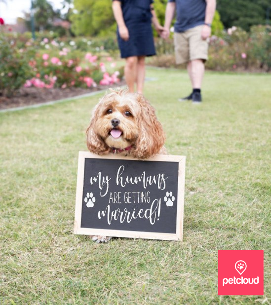 Dog engagement signs, My Humans are getting married, save the date dog signs