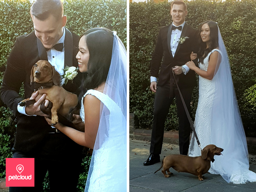 Bride and Groom at Wedding with Dog, dog friendly wedding, petcloud