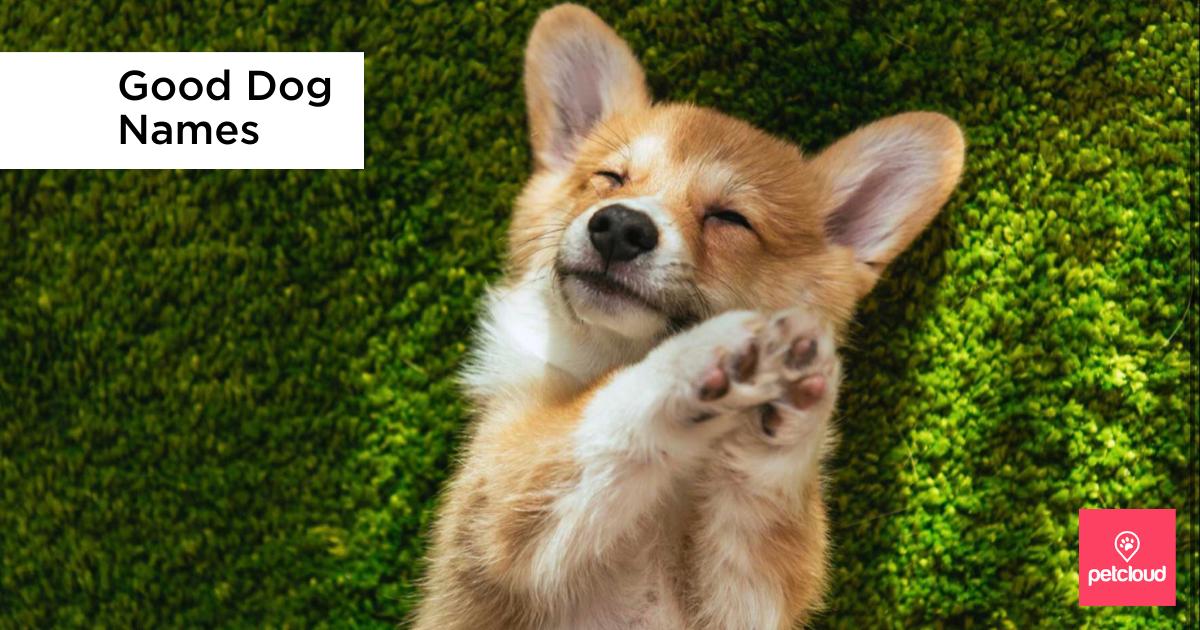 Good dog names, top dog names, cute corgi puppy on green grass