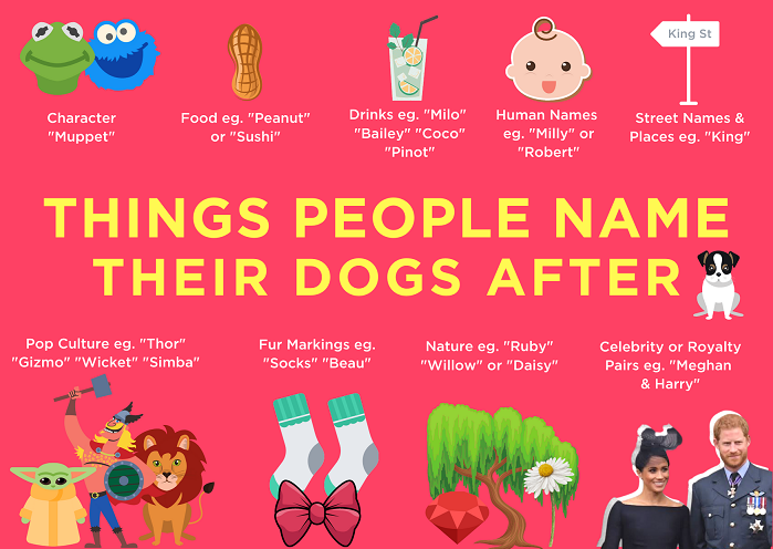 top dog names, good dog names, popular names people call their dogs