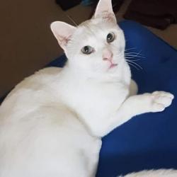 This minders pet